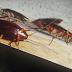 Κατσαρίδες στο σπίτι: 7 απλοί και φυσικοί τρόποι για να απαλλαγείτε μια για πάντα