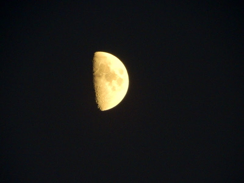 silent sunday, nattynikki moon
