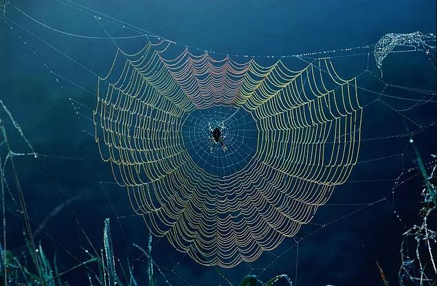 örümcek ağı wallpaper