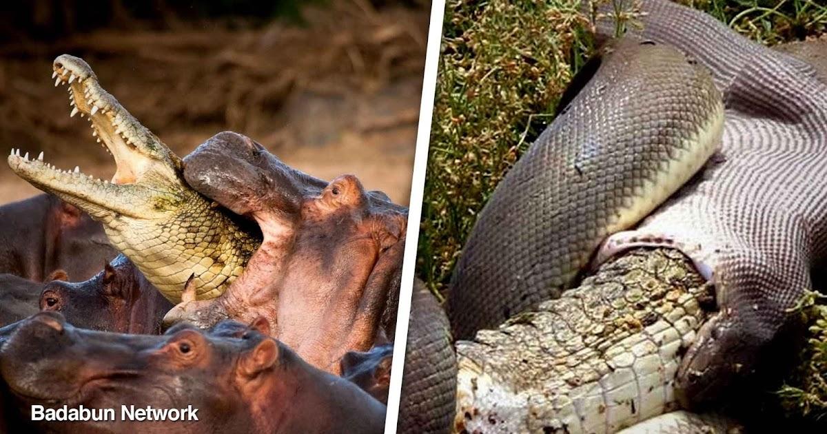 animales comunes geniales hermosos raros sorprendentes sorpresas