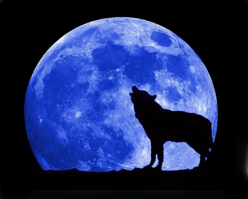 [Image: blue-moon-wolf-full.jpg]
