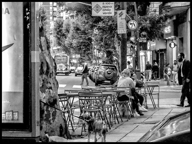 Escena en la vereda de un bar,un perro atado a un poste.