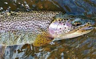 Applegate-river-fishing