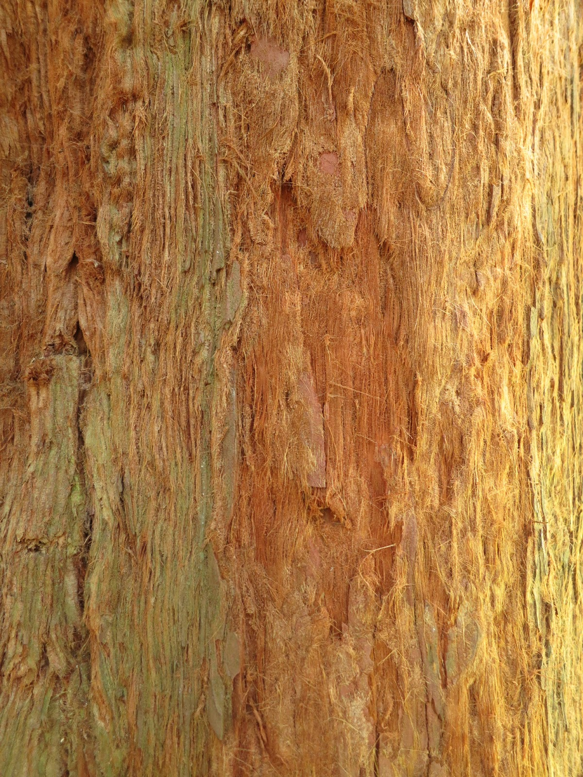 Close up of fibrous bark of redwood tree showing variety of colours and textures.
