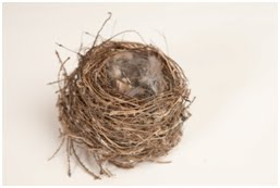 NAMC montessori preschool classroom studying birds nest