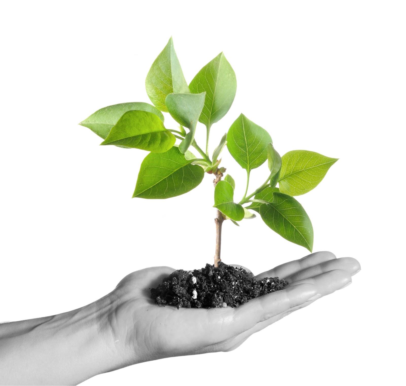 Familien danmark benner og wrubels omsorgsteori for Green pflanzen