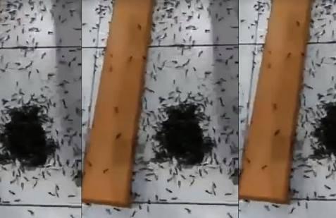 ( VIDEOS ) Plaga De Insectos Invaden Iglesia En Peru.