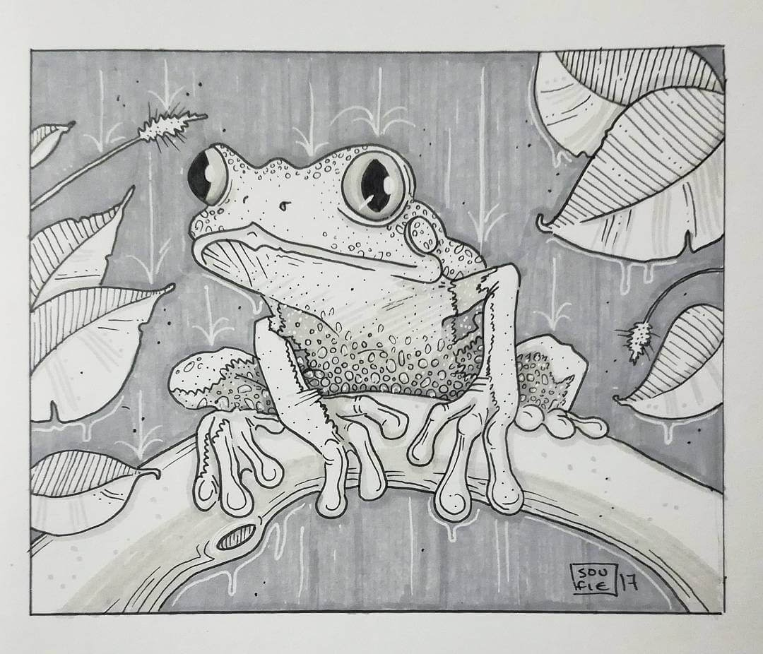 10-The-Frog-Sofia-Härö-Black-and-White-Ink-Animal-Drawings-www-designstack-co