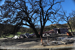 Photo showing the huge Old Wedding Oak that burned Western Town Paramount Ranch