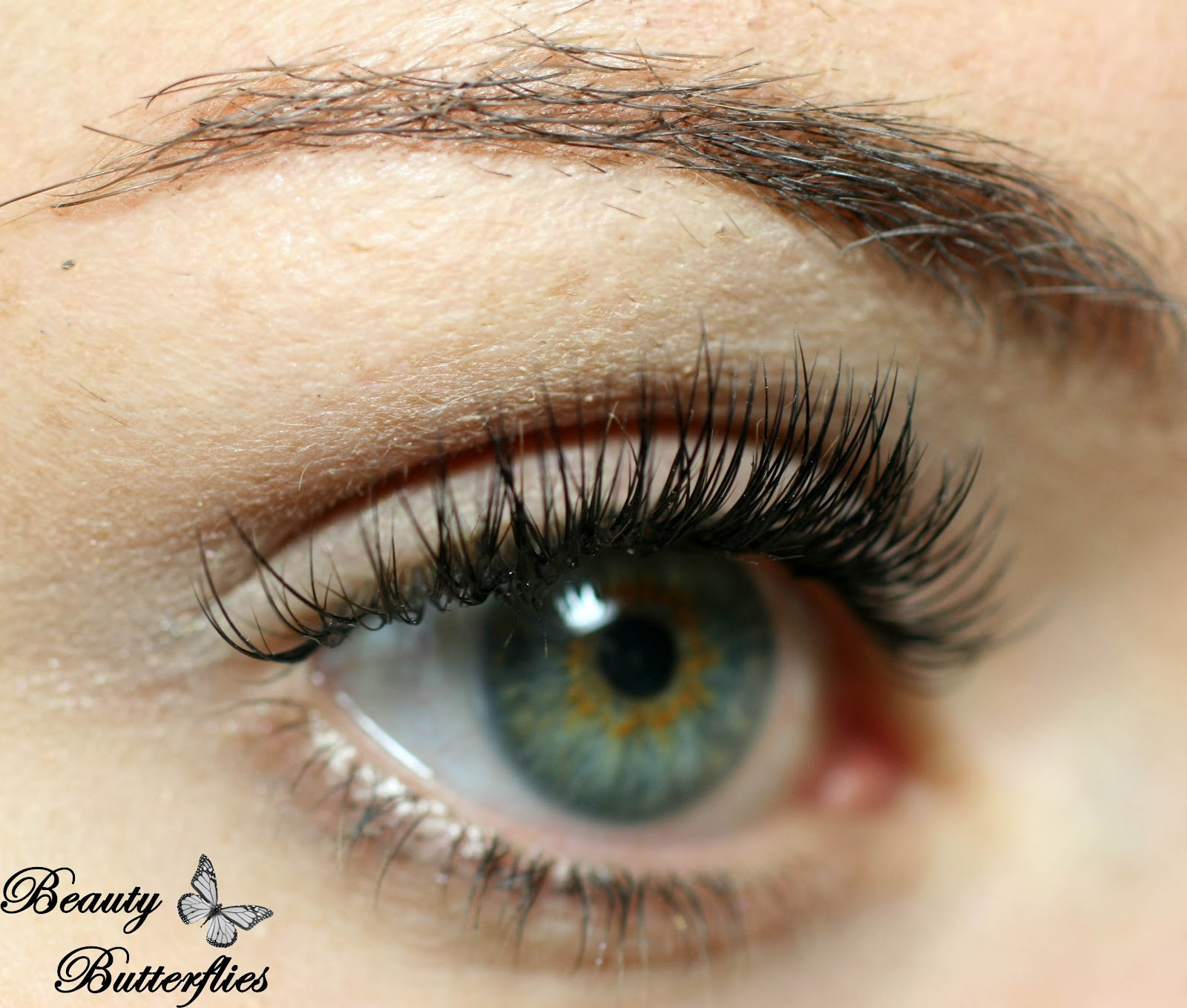 Review Luxus Lashes Traumhafte Wimpern Bei Elegantexcellent