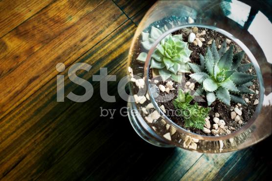 Terrarium-Succulent-terrarium-jakarta-indonesia-blogspot-com4
