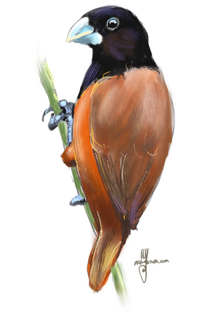 Chestnut munia Bird painting by Ulf Artmagenta