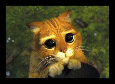 oczy-kota-ze-shreka