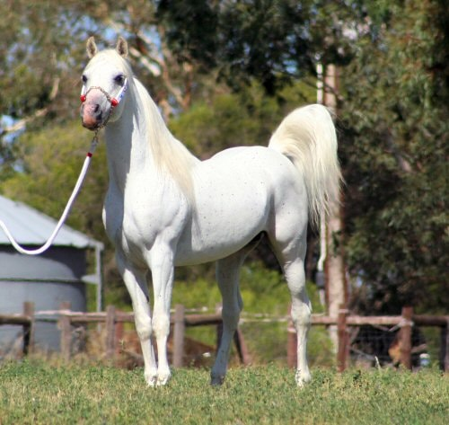 أجمل أنواع الأحصنة في العالم