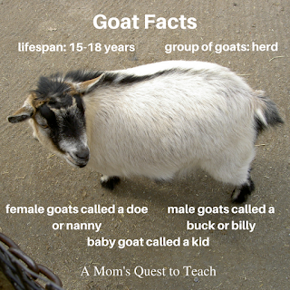 Goat Craft and goat facts