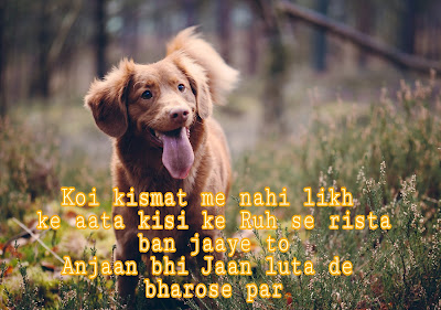 sad shayaris,love shayaris, inspirational shayaris, love quotes,sad quates, inspirational quotes,