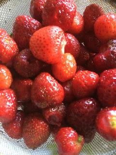 Strawberries, life on pig row