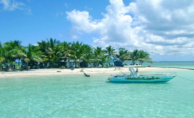 Lesteflo : excursion et visite de Mangrove en Guadeloupe