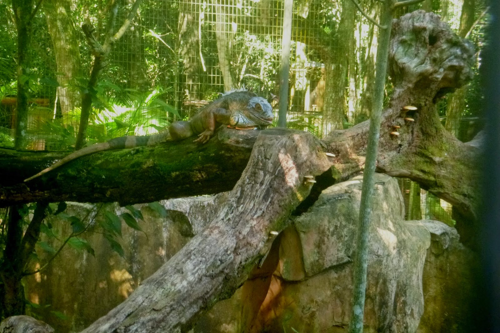 Parque das Aves - Foz do Iguaçu - PR