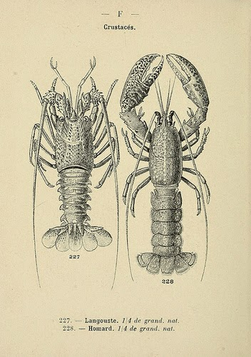 Behind the French Menu: Homard - The Two Clawed European Lobster. Lobster on French Menus.