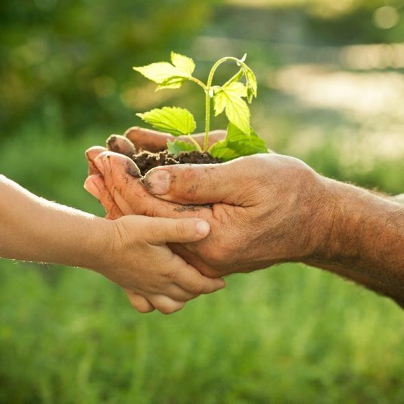 los valores ambientales