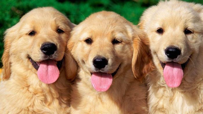 Hati-hati, Ini Bahaya Mematikan Air Liur Anjing Bagi Manusia