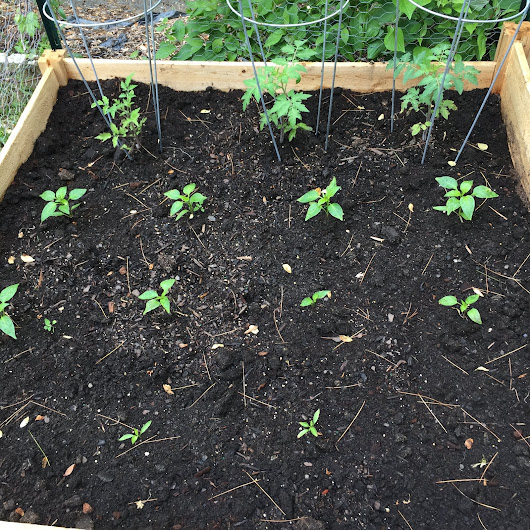 Beginners Tips on Maximizing Your Vegetable Garden