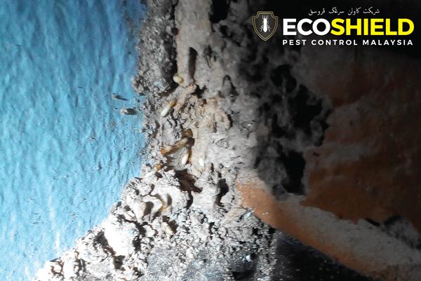 Eco Shield Pest Control Malaysia Pest Control Selangor