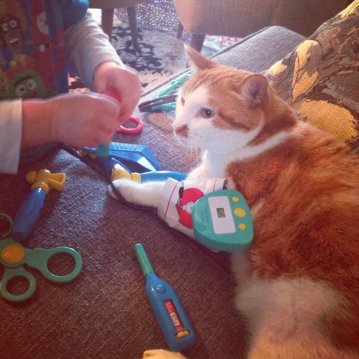 Funny cats - part 88 (40 pics + 10 gifs), cat plays doctor with human kid