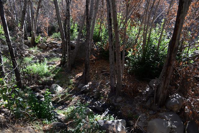 a bit of flowing creek