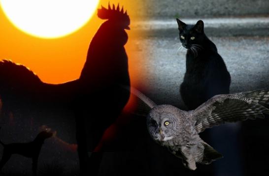 Unduh 52+  Gambar Burung Hantu Yang Jahat  Terbaru Gratis