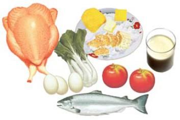 Makanan 4 Sehat 5 Sempurna Rumah Ipa Sd