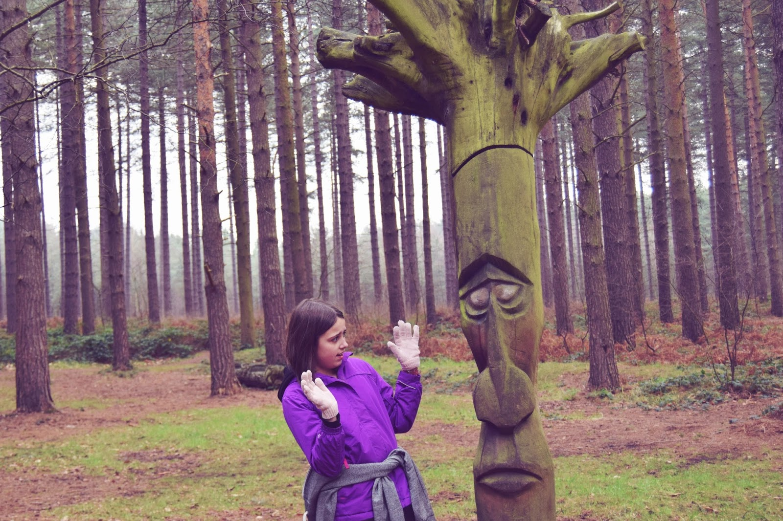 Surprise: My Sunday Photo:  Sherwood Pines, Edwinstowe