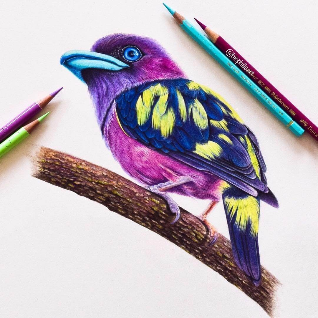 02-Banded-Broadbill-Sallyann-Brightly-Colored-Animal-Pencil-Drawings-www-designstack-co