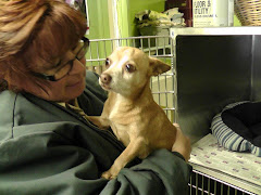 1/23/12   Max Needs Rescue or Adopter