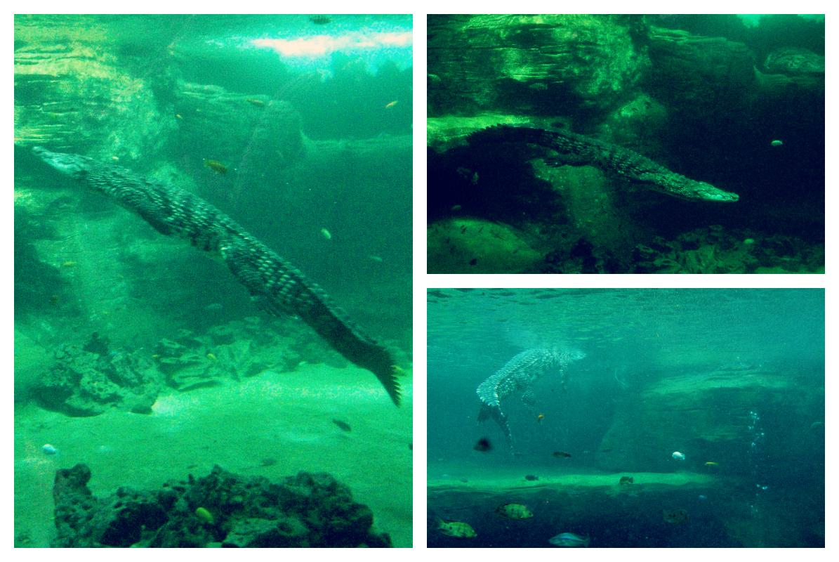 krokodyle - ZOO Hamburg