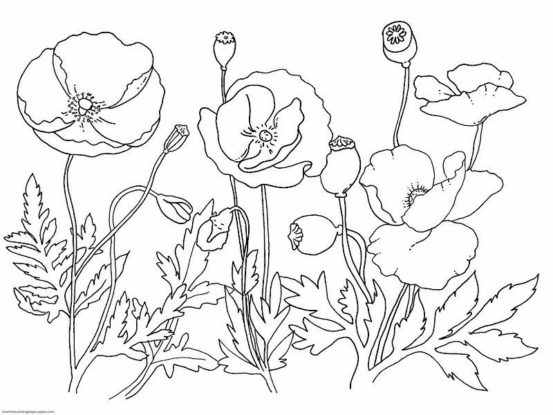 printable oriental coloring pages title=