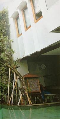 Tukang Taman Vertikal Surabaya | Vertical Garden 11