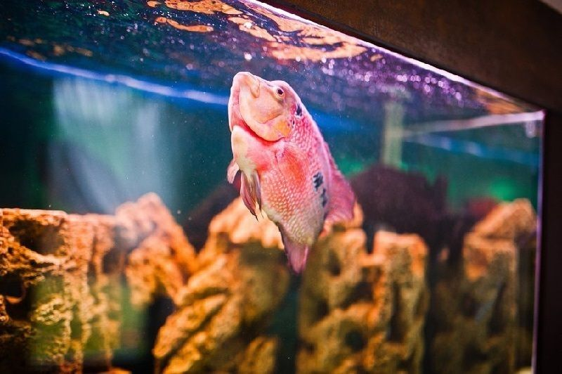 kenapa ikan naik ke permukaan