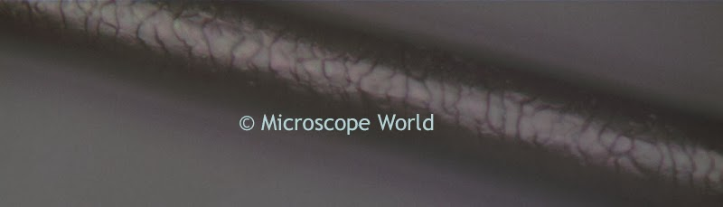 Metallurgical microscope image of human hair at 500x