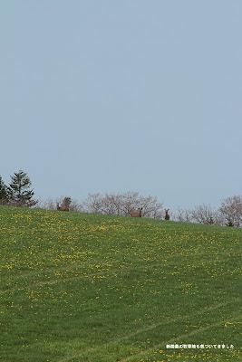 新酪の牧草も色づいてきました