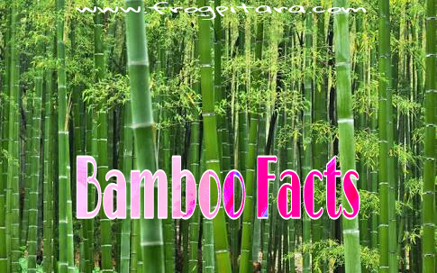 Bamboo Facts In Hindi/ Baans