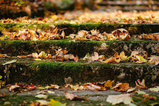 Shallow stone steps covered in moss and fallen leaves.