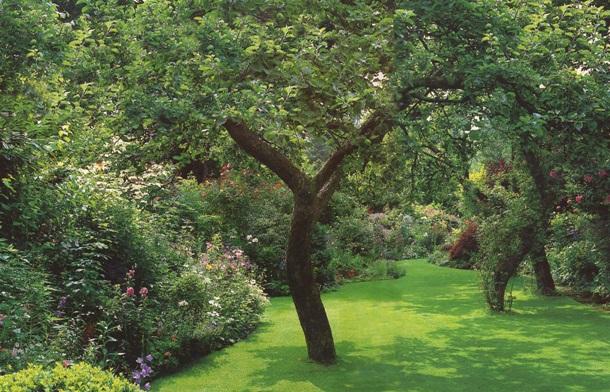 Как облагородить старый сад