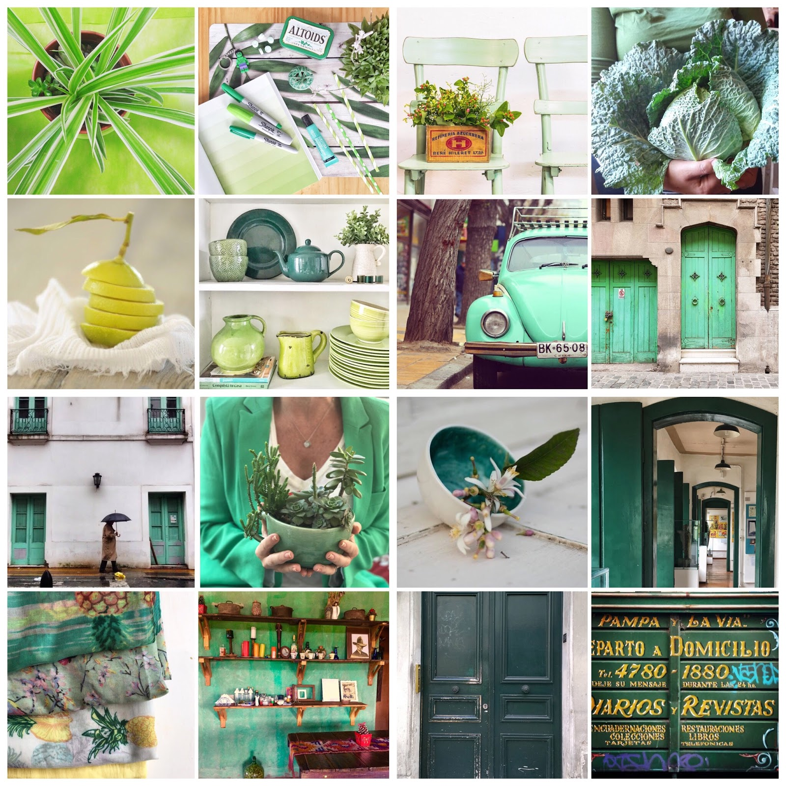 El significado del verde por Mariana Hogg de Alalma