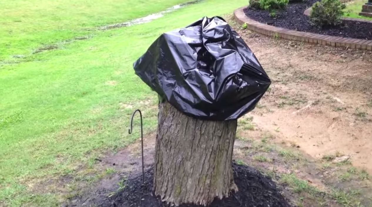 Adorable Tree Stump Project