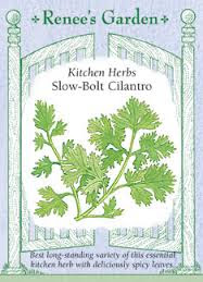 Celebrate the 2017 Herb of the Year-Cilantro!
