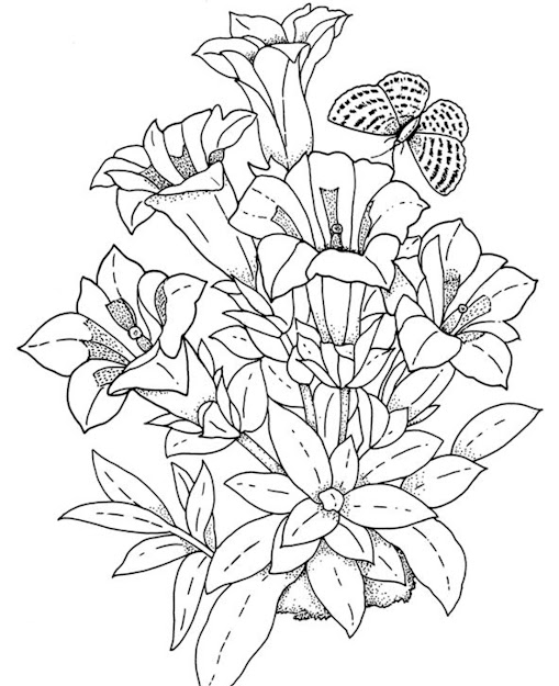 Download And Print Realistic Flowers Coloring Pages
