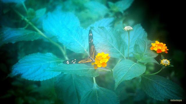Zwart wit oranje vlinder op bloem