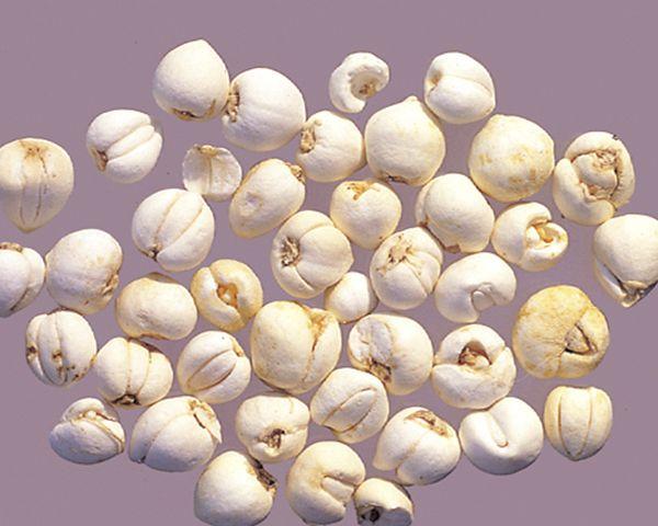 Xuyên Bối Mẫu - Fritillaria-BulbUs Fritillariae - Nguyên liệu làm thuốc Chữa Ho Hen